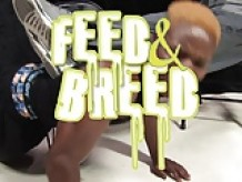 Feed and Breed Volume #1